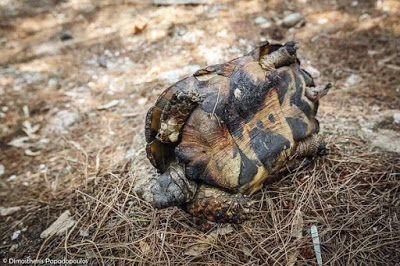 Αν βρείτε άγρια ζώα, πτηνά, ερπετά, χελώνες, σκαντζόχοιρους, φίδια, αλεπούδες κ.ά. που έχουν τραυματιστεί από τις πυρκαγιές  Read more: http://daphnechronopoulou.blogspot.com/2015/07/40-ant1xeftiles.html#ixzz3gAngTK2s   60-70 Πυρκαϊές #GreeceOnFire + πώς θα βοηθήσουμε τραυματισμένα ζώα + ολίγο από #ant1_xeftiles