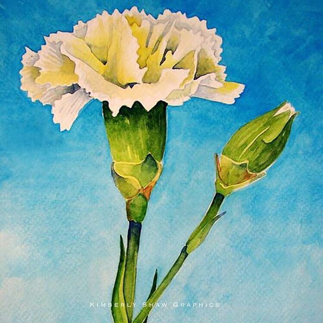 A White Carnation Watercolor For January Birthdays Happy