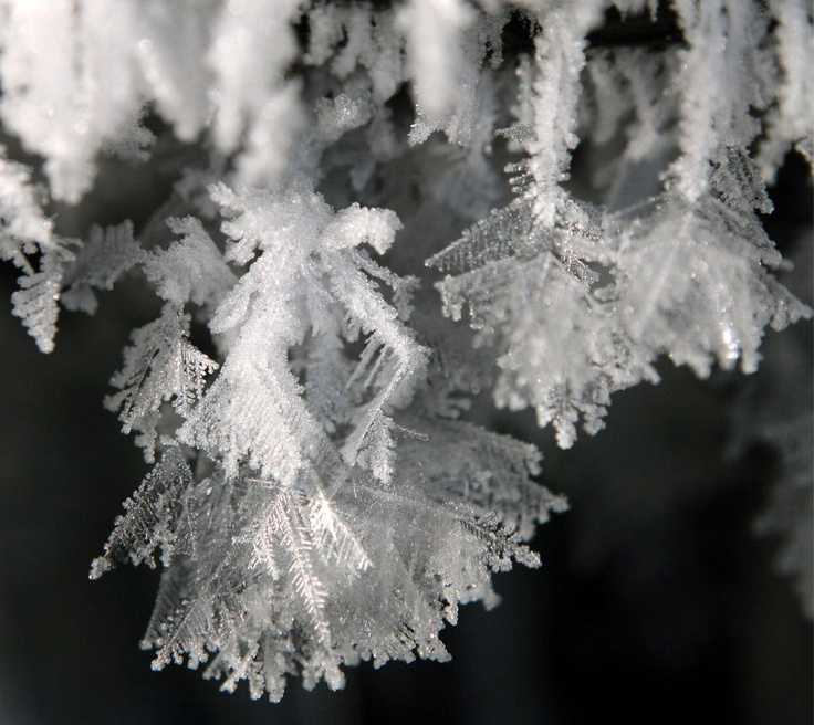 Ice crystals ~ Eastern Germany, Tuesday, Feb. 7, 2012 Uwe Meinhold