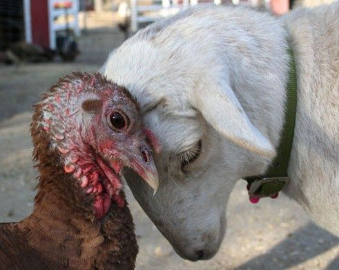 Animals don't judge they just love www.pawsforthenews.tv