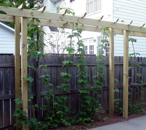 The method you use to construct your trellis is obviously based on how you plan your hop garden layout. I was at an obvious advantage when constructing my trellis, as I already had a steel buildin...