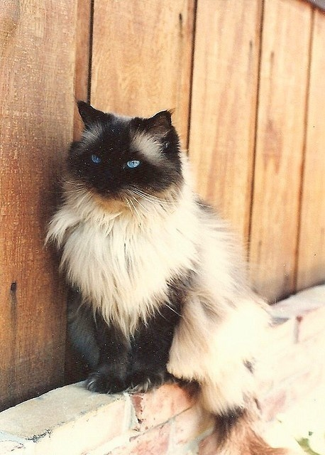 gizmo the cat