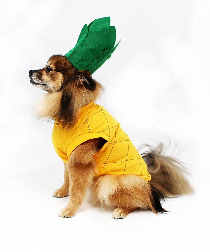 28 best Dog Halloween Costumes images on Pinterest | Dog ...