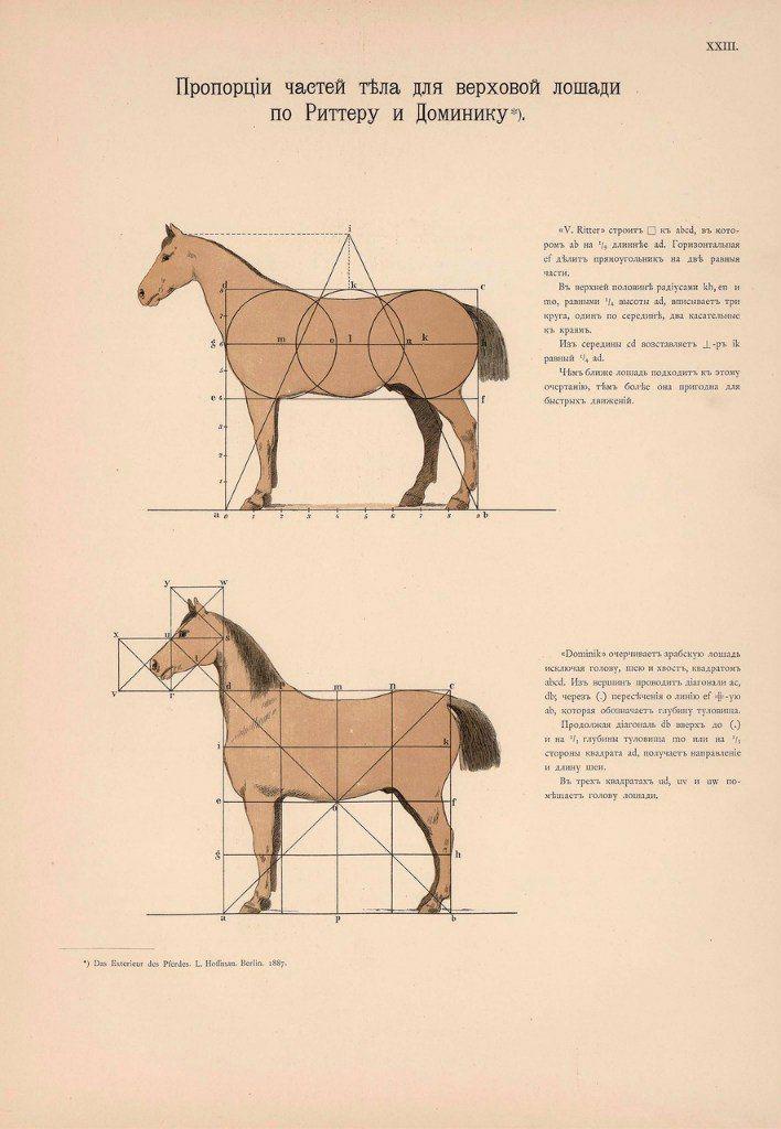 Großzügig Pferdegelenke Anatomie Bilder - Anatomie Von Menschlichen ...