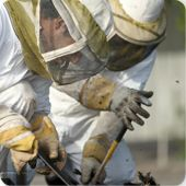 Bee Removal * From ONLY $48 Phoenix, Glendale, Peoria, Scottsdale, Tempe, Mesa, ChandlerBee Control, Wasp Control, Wasp Removal, Honeycomb Removal, Emergency Bee Removal #bee, #bees, #bee #removal, #bee #control, #bee #exterminator, #bee #removal #scottsdale, #bee #removal #phoenix http://south-dakota.remmont.com/bee-removal-from-only-48-phoenix-glendale-peoria-scottsdale-tempe-mesa-chandlerbee-control-wasp-control-wasp-removal-honeycomb-removal-emergency-bee-removal-bee-bees-bee-removal-b…