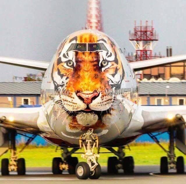 """Rossiya Airlines Boeing 747-446 in the """"Amur Tiger Conservation"""" livery"""