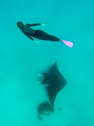 swimming with manta rays off Ningaloo Reef is a must do when travelling Western Australia - photo Greg Snell