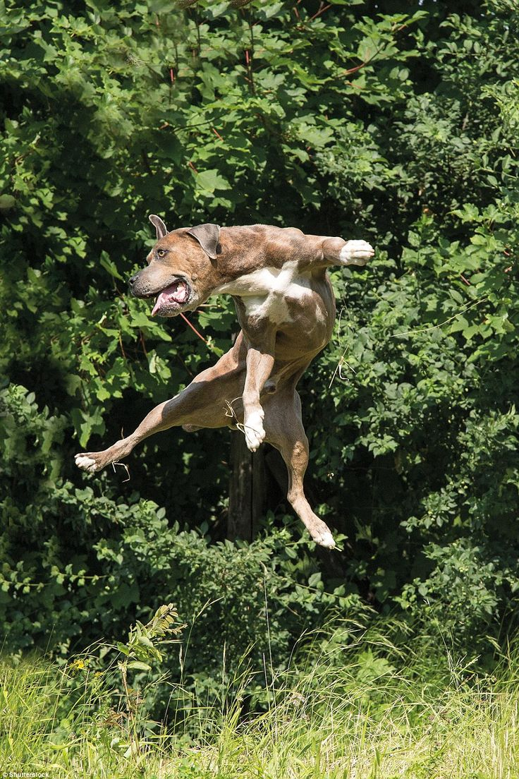 Best Leaping Dogs Images On Pinterest Animals Flying Dog - Hilarious photographs dogs floating mid air