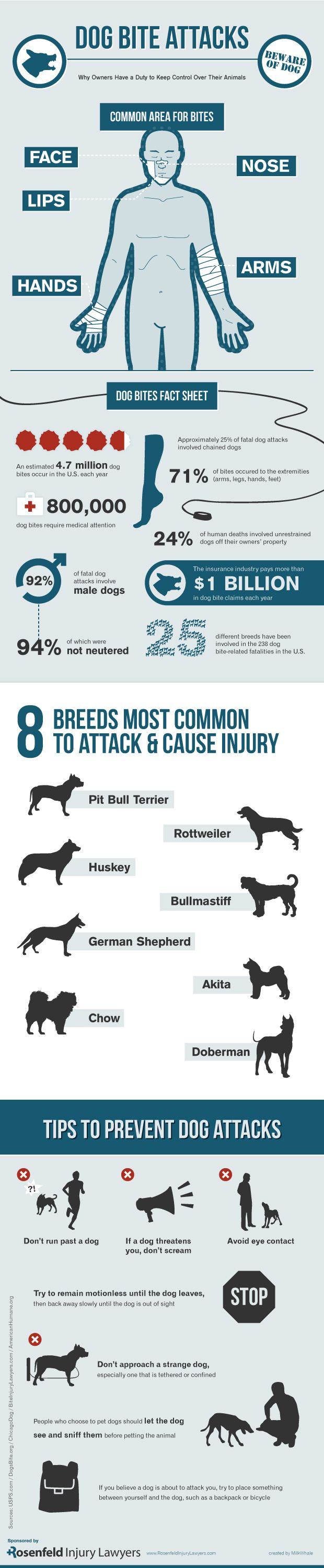 Dog bites pose a serious risk of injury to many people.  This infographic shows the most common areas of the body injured in dog bite attacks, most common breeds to attack and tips for preventing dog attacks.