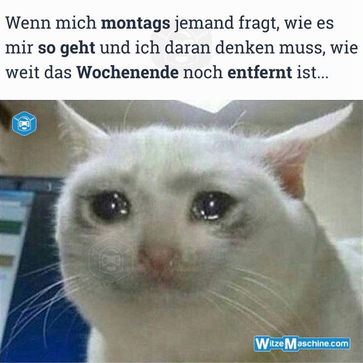 Montag Witze - Traurige Katze weint - Wochenende