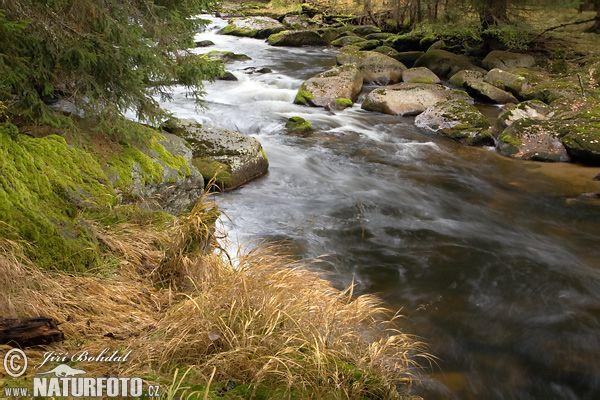 řeka Křemelná (Sum)