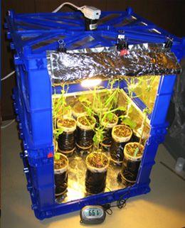 Wisconsin Программа Fast Plants®