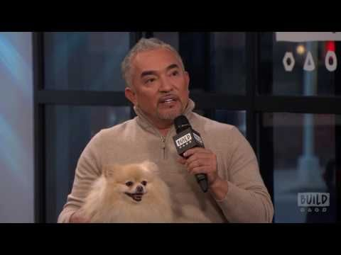 "Cesar And Andre Millan Discuss Their Show, ""Dog Nation"" And The Book, ""Cesar Millan's Lessons From T - YouTube"