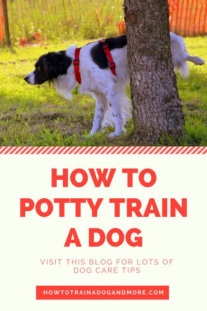 how to potty train a dog...visit this blog for lots of dog training tips, including barking, biting, aggression, toilet training, jumping, pulling, separation anxiety and more!