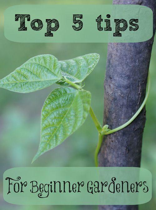 Top 5 tips for beginner gardeners gardens bean plant and plants - Gardening tips for beginners ...