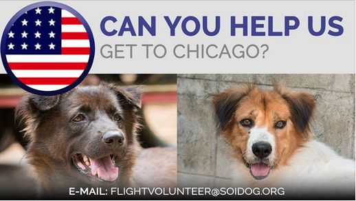 Can you help Gizma and Lum Luk Ka?  If you are traveling FROM Thailand TO Chicago on BOOKED tickets with Thai Airways, All Nippon Airways (ANA), China Airlines, Qatar, Korean Air, JAL, EVA, Lufthansa or KLM, please EMAILhttps://www.flightvolunteer@soidog.org. https://www.soidog.org/content/become-flight-volunteer