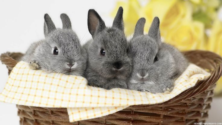 rabbit-wallpaper 4