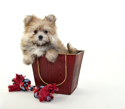 You could WIN R500 just by telling us if you own a pet! http://www.calorababy.co.za/forum/viewtopic.php?f=31&t=11718