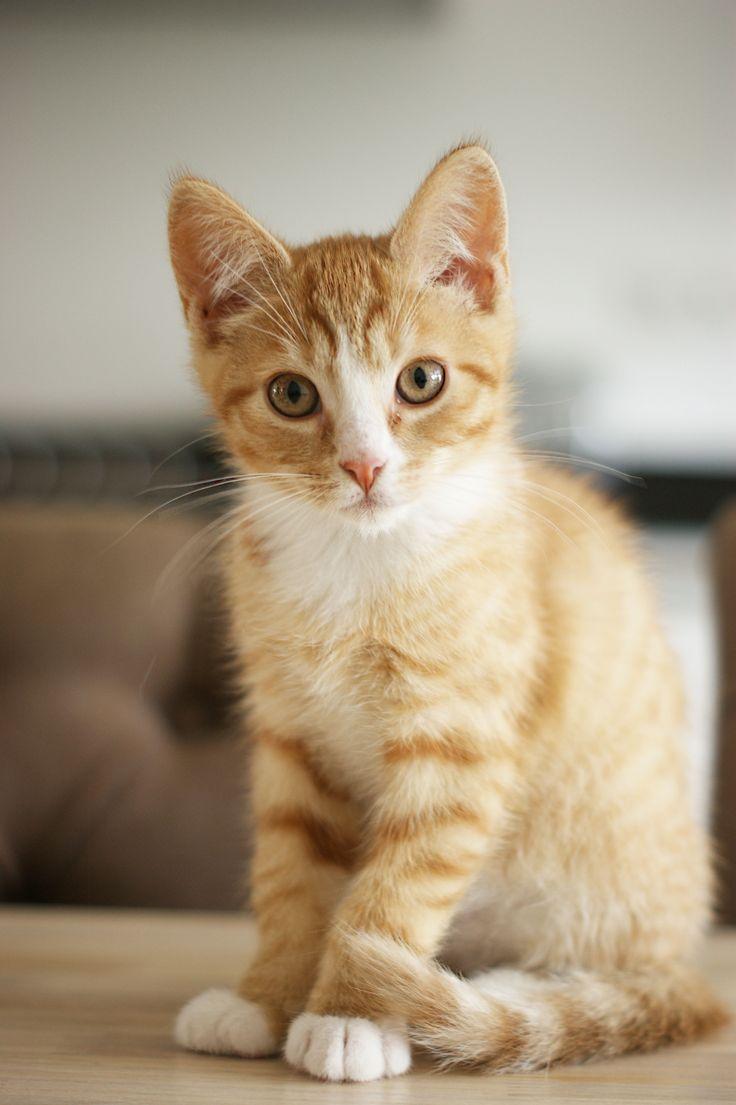Kleine Tom van 11 weken poseert geduldig en gaat er eens lekker voor zitten.