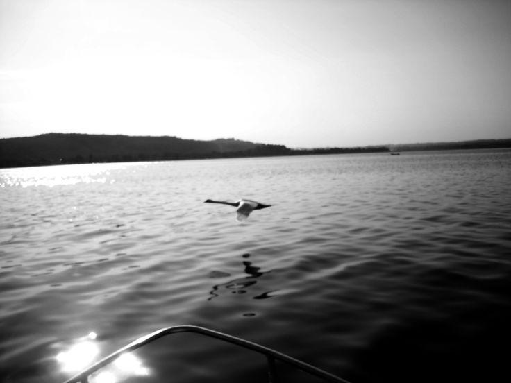 Volo Acquatico - Lago Maggiore Luglio 2008