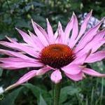 Plantas medicinales que alivian las quemaduras