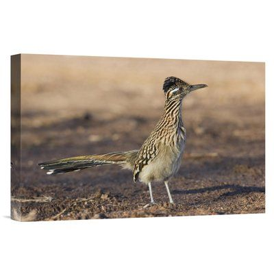 "East Urban Home New Mexico 'Greater Roadrunner Profile' Photographic Print on Wrapped Canvas Size: 24"" H x 36"" W"