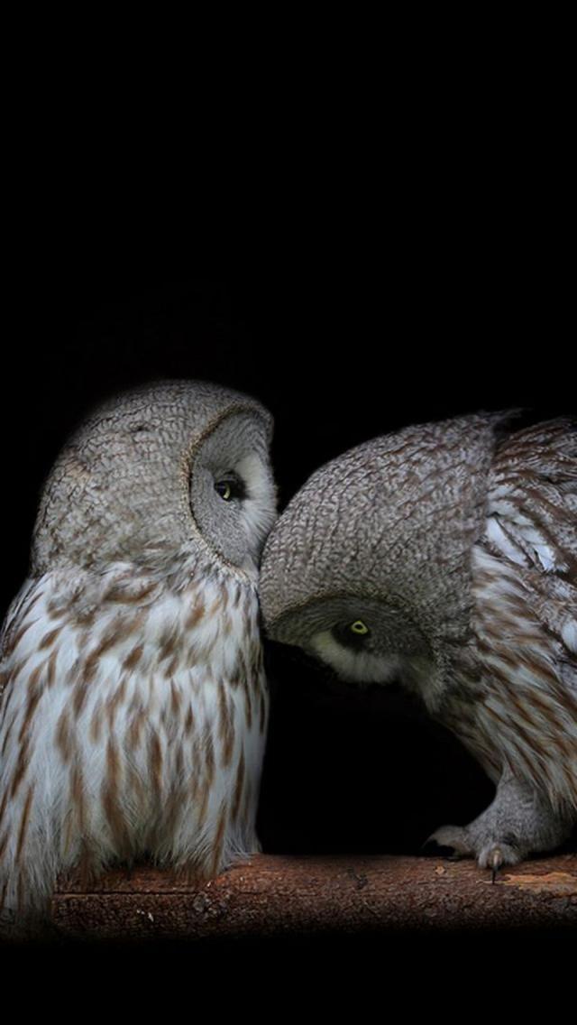 Bird, branch, black background, a pair of owls #SpiritHoods #InnerAnimal