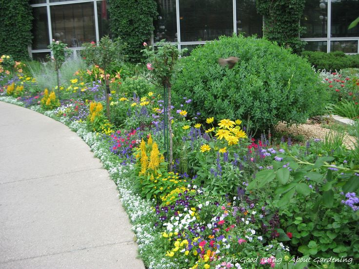 25 best Border plants ideas on Pinterest Driveway landscaping