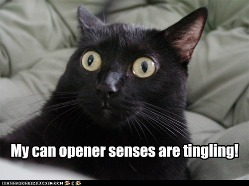 My can opener senses are tingling!: Cat Eye, Funny Pics, Nightshift, Funny Pictures, Night Shift, Funny Stuff, Funnystuff, Coff Cans, Crazy Eye