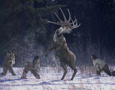 Irish Elk(Megaceros)