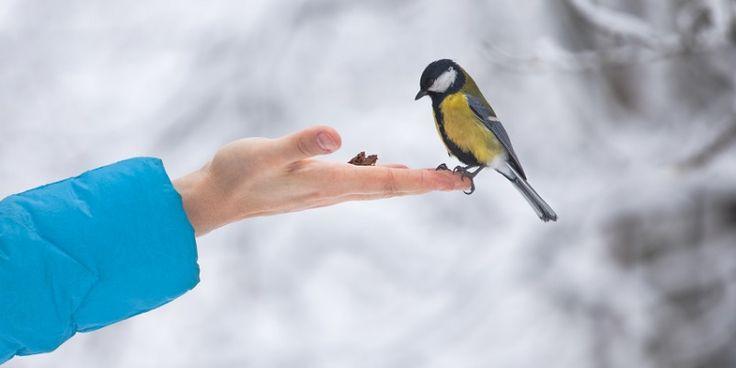 Leuk om te doen: zorgen dat de vogels in je tuin kunnen genieten van een door jou gemaakte traktatie. Hangbijvoorbeeld zelfgemaaktevetbollen op of maak een voedersilo van een plastic fles en twee oude pollepels. Kleine moeite, groots effect. Deze drie vogeltraktaties zijn een eitje om zelf te maken. Idee 1: zo maak je een voedersilo…