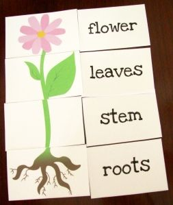 This is a wonderful flower matching game.  For preschoolers, this would need to be a small group activity instead of an individual activity so that reading help could be given to the child.  This is a great way to re-enforce the parts of a plant.