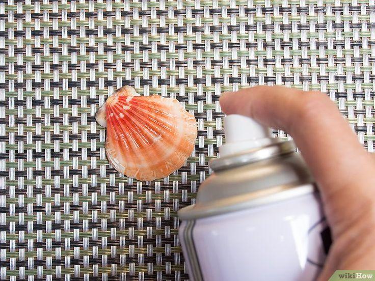 Cómo limpiar y pulir conchas de mar: 12 pasos
