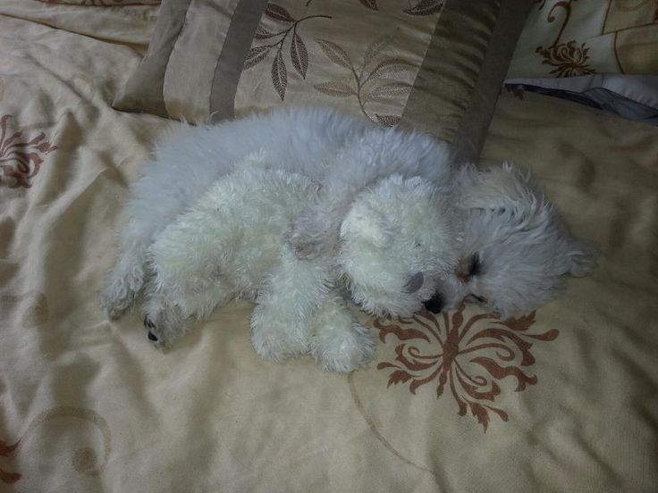 Having a cuddle