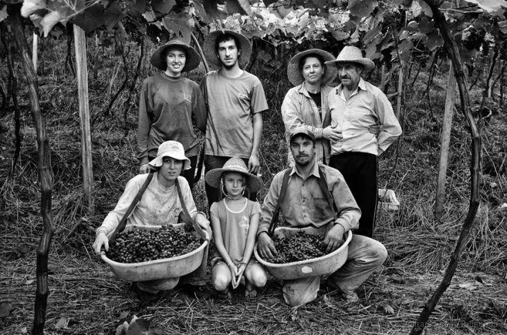 Família Girelli, trabalham unidos na colheita da uva.  Descendentes de imigrantes italianos que vieram de Cremona, Itália.  Farroupilha-RS  Data: 05.03.2012