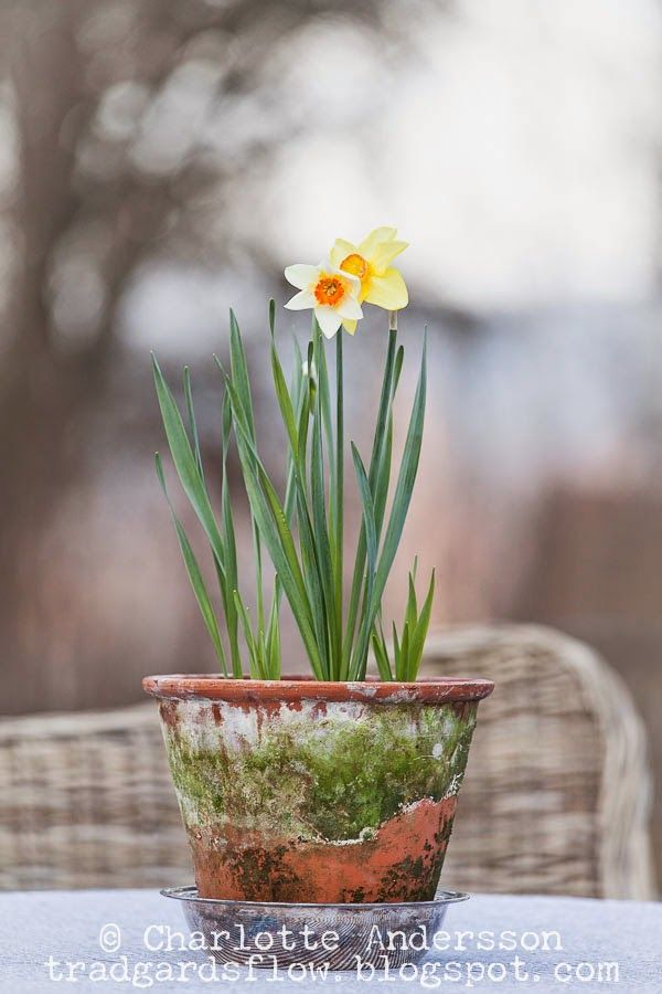 Trädgårdsflow: Simplicity in pots