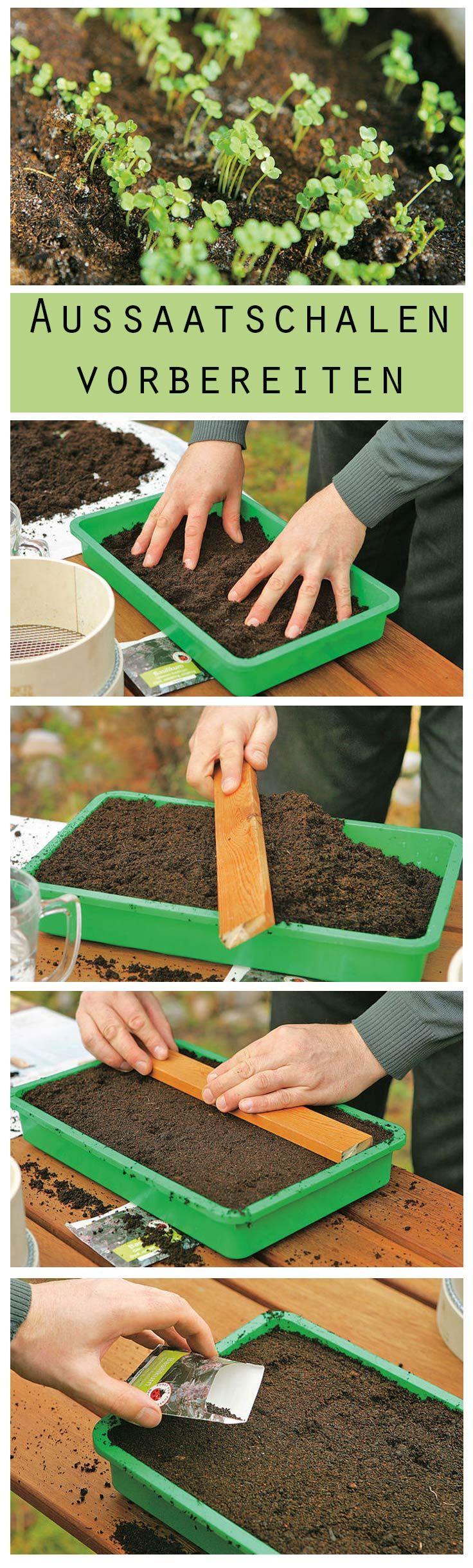 Gute Vorbereitung ist das A und O – auch bei der Aussaat von Pflanzensamen. Wir zeigen, wie man Aussaatschalen für die Anzucht von Pflanzen vorbereitet.