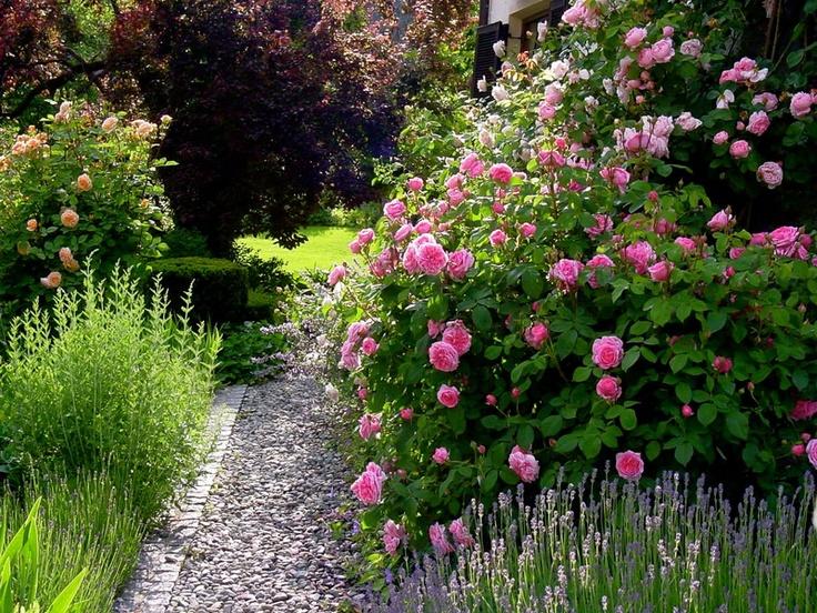 ♥ rozen borders en een verscholen groen grasveldje waar de kinderen heerlijk kunnen spelen, we nemen een deken mee en een gevulde picknick mand! Dromen van een heerlijke middag in onze eigen achtertuin ♥