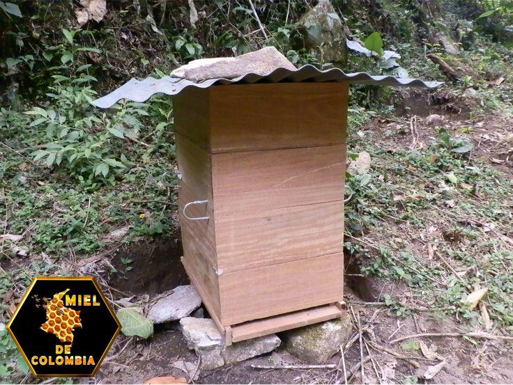 Es posible hacer apicultura sin saber nada de ella, fabricando nuestro propio material con madera y poblando nuestras económicas colmenas con enjambres que capturaremos gratis. El resultado será una colmena automática que no se abrirá más que para cosechar.