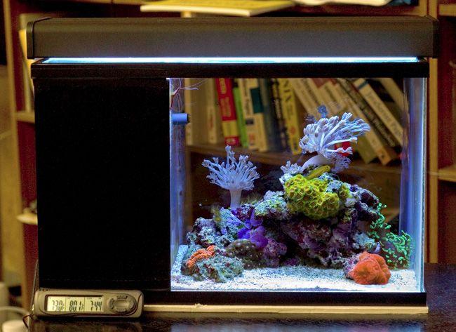 Lauren's Dirt Cheap DIY Nano Reef - Reef Central Online Community, love her set-up, saltwater aquarium, nano tank, nano saltwater, reef tank