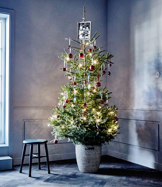 Vyšší vianočný stromček v klasickom štýle postavený v rohu.