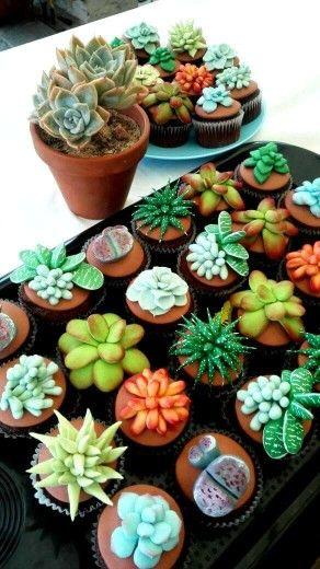 Succulent cupcakes...