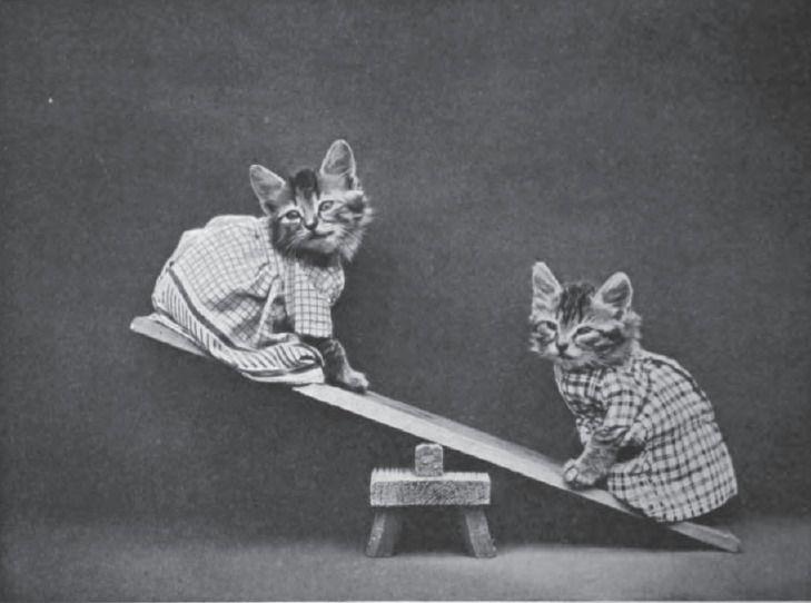 feline see-saw