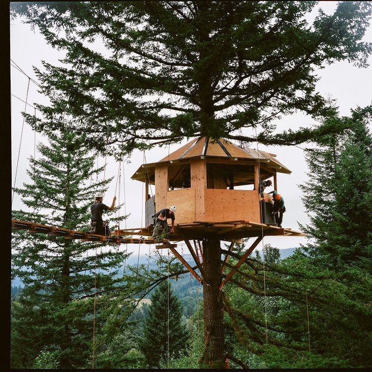 Summer at the Cinder Cone — Tree house, Luxury tree