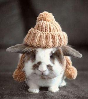 : Hats, Rabbit, Animals, Cuteness, Bunny, Pet, Adorable, Things, Bunnies