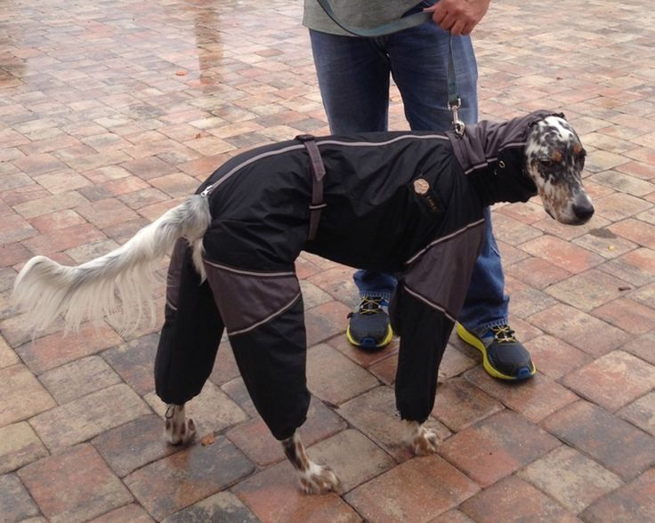 1000 Images About Custom Made Dog Snowsuits Amp Raincoats