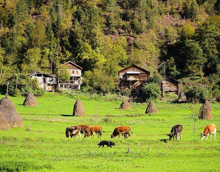Özlem Günsall.. Fotoğraflarından ..Kastamonu Şenpazar
