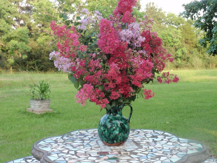 my crape myrtles ...