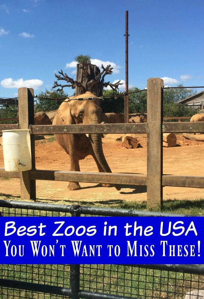 can the existence of zoos be Can the existence of zoos still be convincingly defended zoos also often claim that preserving species by setting up complex worldwide breeding programs is an important justification for their existence.