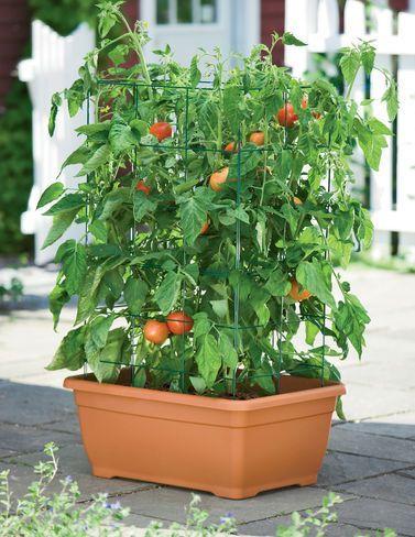 Balcony Garden Vegetable Pots How To Grow
